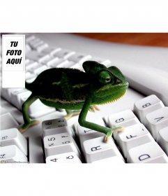 Fondo para twitter con imagen de camaleón en un teclado. Personalizalo con tu foto en el lateral