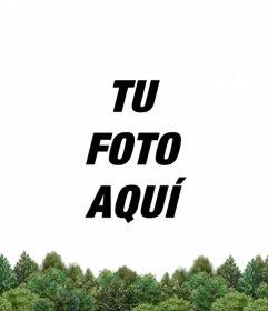 Personaliza tu foto de perfil de Facebook y Twitter y añade un bosque verde en la parte inferior subiendo tu imagen online