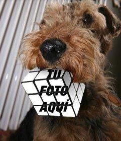 Fotomontaje cubo de rubick mordido por un perro. Sube una foto y crea este efecto
