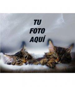 Collage con dos gatitos