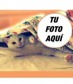 Collage con un gato estirándose en una cama, dando los buenos días con las patitas