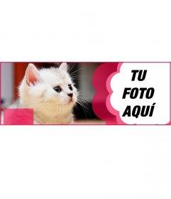 Cabecera para facebook personalizada con un gato blanco y una flor rosa donde poner tu fotografía y el texto que quieras