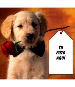 Fotomontaje con un cachorrito para poner tu foto en una tarjeta sujetada por el perrito
