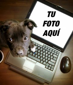 Collage con un cachorro jugando en un ordenador, donde puedes poner tu fotografía