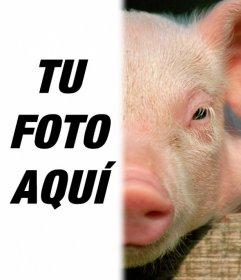 Cerdo con tu cara para hacer un fotomontaje con una foto tuya