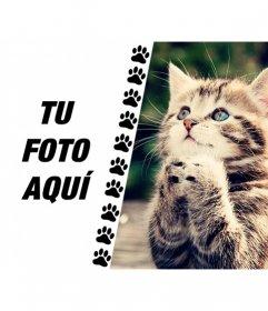 Crea un collage con un gatito divertido pidiéndote algo y una foto tuya en la izquierda con una franja de patitas dibujadas