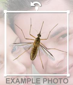 Fotomontaje online para poner un mosquito en tus fotos