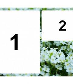 Collage de dos fotos con flores blancas