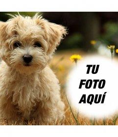 Foto efecto con un tierno cachorro donde puedes añadir tu foto gratis