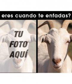 Edita este divertido test con tu foto si eres una cabra cuando te enfadas