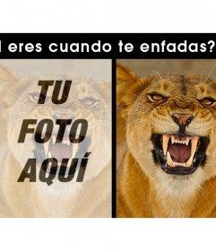 ¿Eres como una leona cuando te enfadas? Sube tu foto si es así