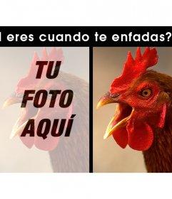 Divertido fotomontaje para editar y con un gallo enfadado