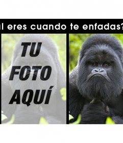 Divertido montaje con un gorila enfadado para subir tus fotos
