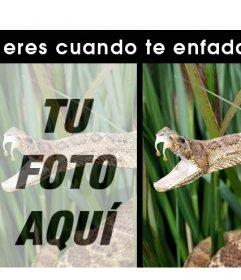 Divertido efecto para añadir tu foto si eres una serpiente cuando te enfadas
