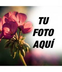 Foto efecto gratis para tus fotos con un filtro de una flor