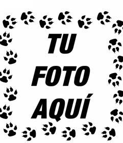Pisadas de gato rodeando tus imágenes