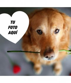 Romántico foto efecto con un perro y una rosa para añadir tu foto
