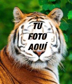 Fotomontaje de un tigre para subir tu foto en su cara