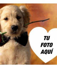 Sube tu foto a este efecto con un tierno perro y una rosa