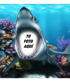 Tu foto en la boca de un tiburón bajo el mar con este fotomontaje divertido