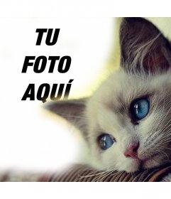 Montaje con un tierno gato de ojos azules para añadir tu foto