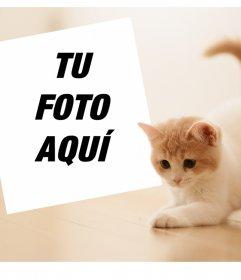 Fotomontaje con un tierno gatito para subir tu foto favorita