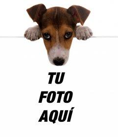 Efecto online de un tierno perrito sosteniendo tu foto