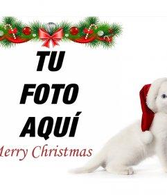 Fotomontaje de Navidad con un gatico para subir tu foto