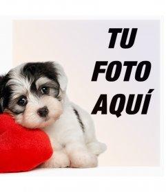 Fotomontaje de un cachorro con un corazón para tu foto