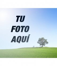 Collage con una foto de un paisaje con un campo verde y un cielo azul donde poner una foto al lado de un árbol