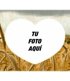 Marco de amor en forma de corazón con un campo de trigo amarillo de fondo