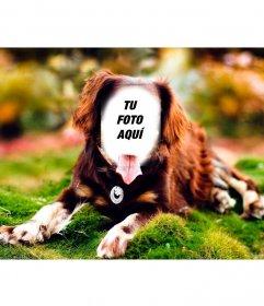Pon tu cara en un perro posando con este fotomontaje online