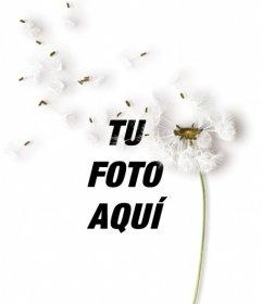 Crea fotomontajes con una flor de diente de león sobre tus imágenes y añade una frase con el color y fuente que quieras