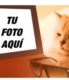 Fotomontaje de un gato aburrido viendo tu foto en el que podrás poner la imagen que quieras