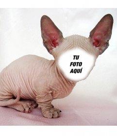 Fotomontaje de un gato calvo Sphynx con grandes orejas donde puedes poner tu cara