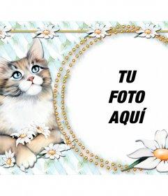 Montaje para poner tu foto con un lindo gatito