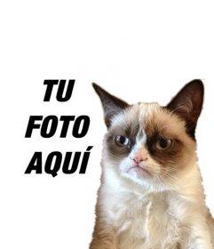 Fotomontaje con el gato Grumpy cat