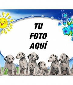 Fotomontaje con perritos dálmata y tu foto de fondo