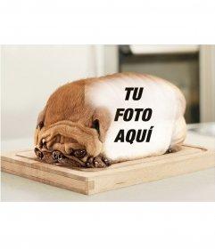 Perro en forma de pan de molde con el lomo para poner tus fotografías