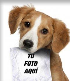 Fotomontaje con un perro cachorro triste en busca de su amo que tiene un papel en la boca donde puedes subir una fotografía