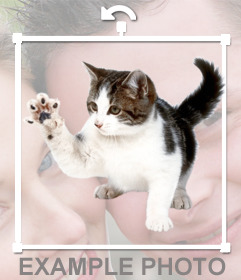 Sticker de gato arañando para poner en tus fotos online
