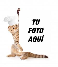 Fotomontaje de gato vestido de cocinero aguantando tu fotografía