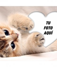 Tierno fotomontaje de un gatito abrazando un corazón para añadir tu foto