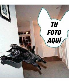 Fotomontaje con un gato saltando como si de una explosión se tratase