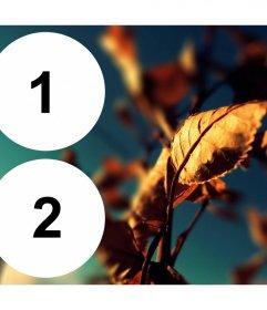 Collage con dos marcos círculo junto a una hoja dorada por el otoño