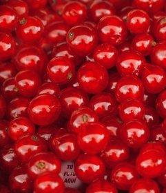 Juego de unas cerezas rojas para encontrar tu foto