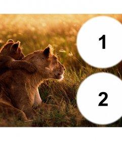 Collage de dos fotos con una leona y su cachorro