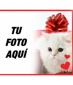 Postal romántica con un gatito blanco persa con corazones delante de una caja de regalo y la foto que subas online