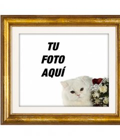 Marco para fotos dorado con un gato blanco persa y rosas rojas y blancas para poner tu foto de amor con tu novio o novia