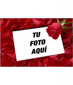 Pon una foto en una Carta de amor con una rosa y fondo de pétalos de rosa